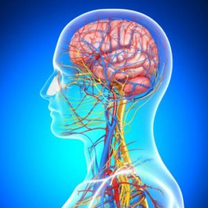Chiropractic CE Online Courses Tumors of the CNS
