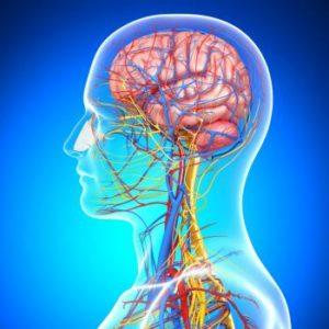 Chiropractic CE Online Courses